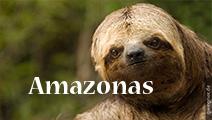 movie_amazonas1