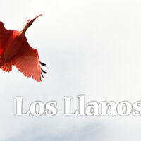 movie_llanos