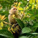 Tiere beobachten im Nationalpark Tortuguero