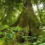 Der Nationalpark Vulkan Arenal