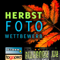 Fotowettbewerb HERBST