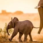 Afrika Hautnah – unsere Botswana Reise