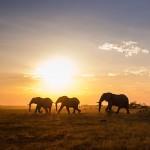 Afrika Hautnah – Folge 9 – Elefanten Parade im Nxai National Park, Botswana