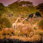Afrika Hautnah – Folge 16 – Fahrt zur Chobe Riverfront und dem Senyati Camp