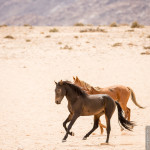 Afrika Hautnah 2 – Folge 2 – Auf nach Namibia!