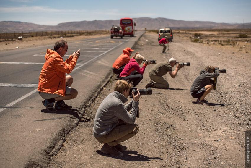 Begeisterte Fotojagd nach den ersten Vicuñas