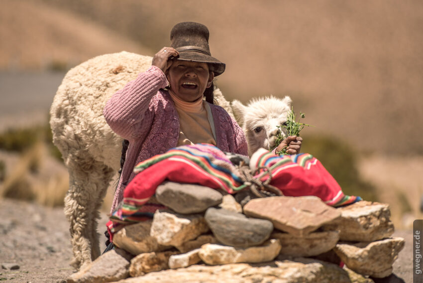 Alte Frau mit Alpaca