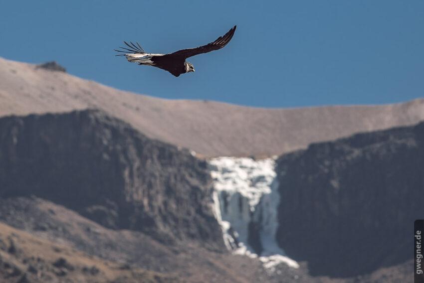 Kondor vor gefrorenem Wasserfall