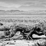 Die Einsamkeit der Wüste