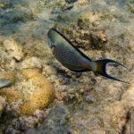 Vielseitige Unterwasserwelt