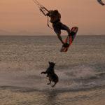 Kitesurfen mit Hund auf Coche, Venezuela