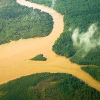 Symbolträchtig - der Amazonas Regenwald