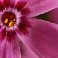 Makro einer Blume im heimischen Garten