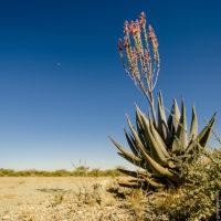 Selbst in der kargsten Wüste findet sich Leben