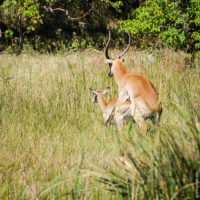 Auch Impalas haben ihren Spaß :)