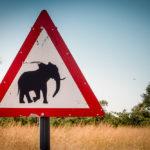 Elephants crossing.