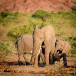 Elefanten im Tuli-Block