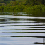 Ein Seitenarm des Rio Negro