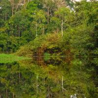 Die Flusswälder des Amazonas