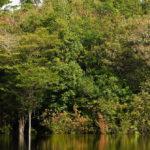 Die Igapós und ihre volle und abwechslungsreiche Vegetation