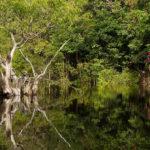 Gespenstisch ragen die Kronen der Bäume aus dem Wasser