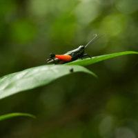 Auch die kleinen Urwaldbewohner sind schön!