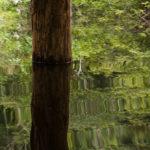 Auch hier stehen die Bäume unter Wasser