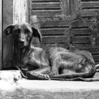 Hund in der Chapada Diamantina