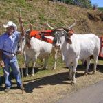 Willkommen in Costa Rica - hier einer der typischen bemalten Ochsenkarren