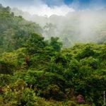 Wunderbarer Nebelwald auf der Höhe des Vulkan Poas