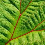 Üppige Vegetation, wohin das Auge reicht