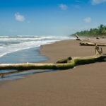 Tortuguero - die karibische Küste