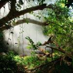 Fumarole im Regenwald