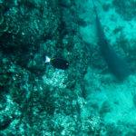 Isla de Caño - Ein ca. 2 Meter großer Hai