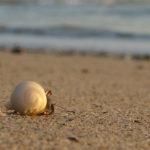 Hermit Crab - Einsiedlerkrebs schaut aufs Meer