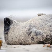Diese kleine Robbe entspannt sich sichtlich...