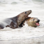 Das Spielen im Wasser ist das größte für die älteren...