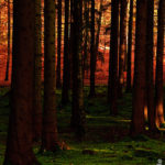 Wald bei Ahrensburg