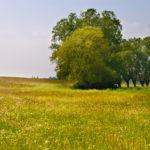 Frühlingswiese auf Rügen