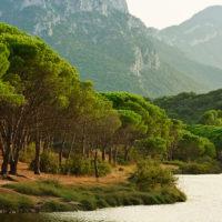 Traumhafte Pineta neben einer Lagune