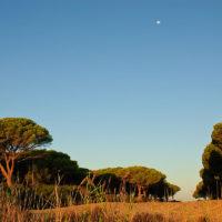 Frühmorgens in der Pineta. Der Mond steht noch am Himmel.