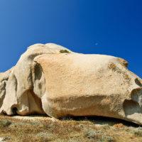 Ein Tucano oder ein Schaf?