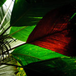 Palmen in allen Größen und Farben