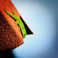 Und auch possierliche Geckos