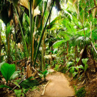 Valle de Mai, hier wachsen die berühmten Coco de Mer