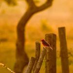 Los Llanos - frühmorgens