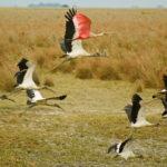 Vogelparadies Los Llanos