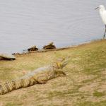 Los Llanos - alle treffen sich an den Wasserlöchern