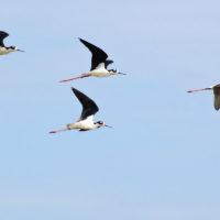 Eine wunderbare Vogelwelt