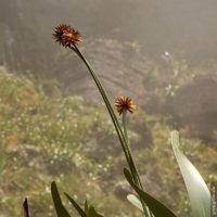 Unbekannte Flora empfängt uns schon kurz vor der Oberfläche